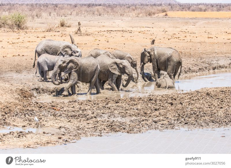 cooling down Vacation & Travel Tourism Trip Adventure Far-off places Freedom Safari Expedition Environment Nature Landscape Earth Sand Water Warmth Drought
