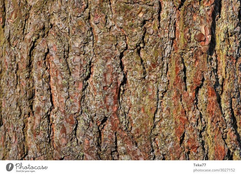 Bark #3 Environment Nature Landscape Plant Tree Esthetic Tree bark Colour photo Subdued colour Close-up