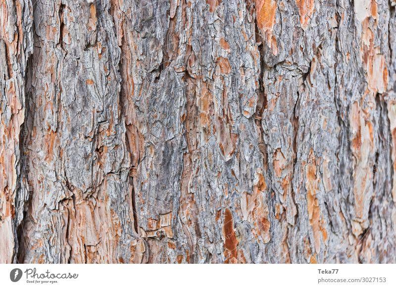 Tree bark #2 Environment Nature Landscape Plant Esthetic Colour photo Subdued colour Exterior shot Close-up