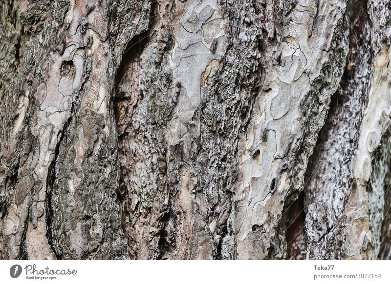 Bark #1 Environment Nature Landscape Plant Tree Esthetic Tree bark Structures and shapes Colour photo Exterior shot Close-up