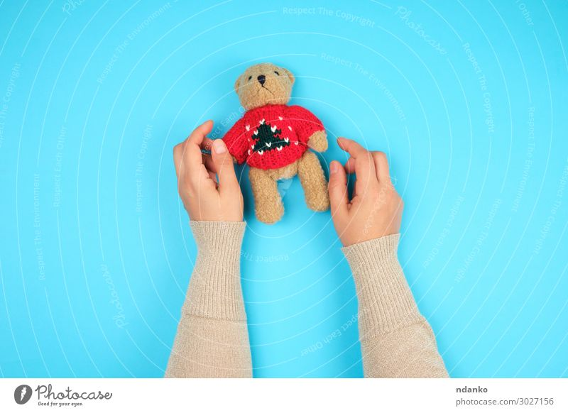 two female hands hold a small toy teddy bear Joy Body Child Infancy Hand Animal Toys Doll Teddy bear Playing Small Funny Cute Retro Soft Blue Brown Green Red