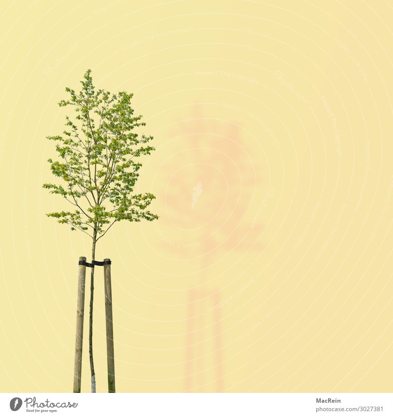 Tree on yellow background Environment Nature Plant Spring Green Environmental protection Transience dee illustration Deciduous tree Copy Space Ecological Leaf
