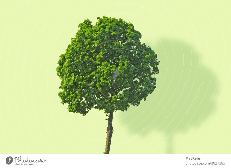 Nature Plant Green Landscape Tree Wood Environment Spring Copy Space Fresh Transience Force Deciduous tree