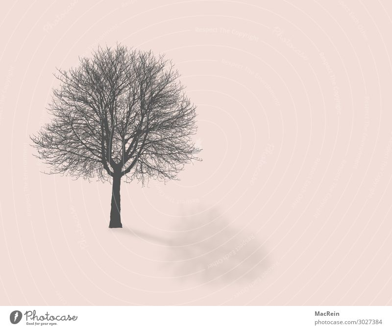 Tree without leaves Environment Nature Landscape Plant Autumn Branch Twigs and branches Tree trunk Deserted Pink Bleak Colour photo Copy Space right