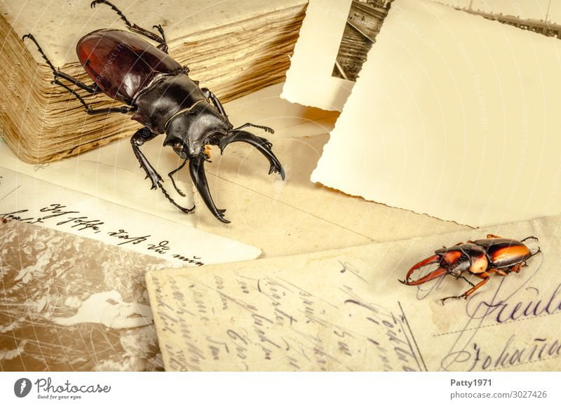 Still life with beetle Vacation & Travel Tourism Adventure Far-off places Expedition natural scientist Wild animal Beetle Stag beetle 2 Animal Card Photography