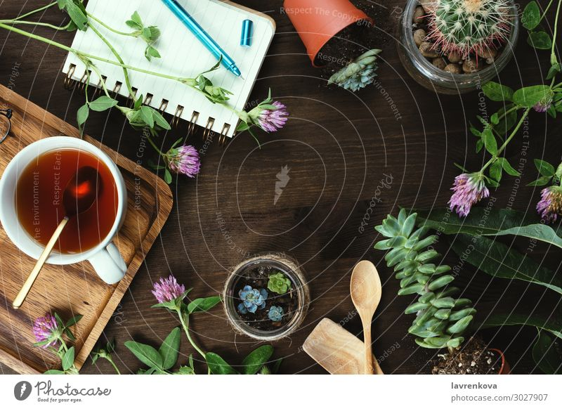 flowers, succulents and tea with notebook on wooden Herbs and spices Rustic Beverage Cup Drinking Escheveria Blossom Botany Cactus Clover Copy Space