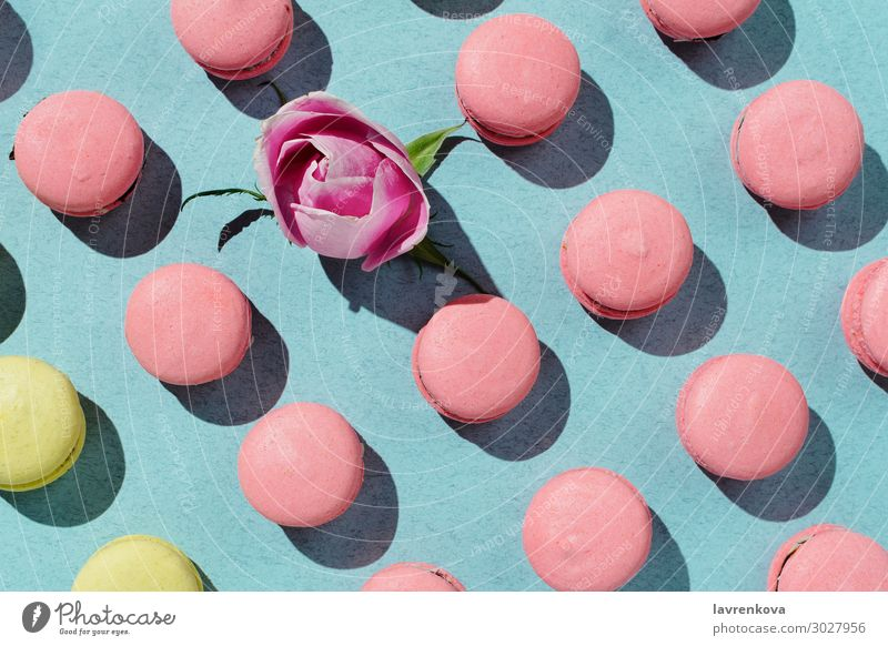 vegan macaroons and rose bud knolled on pastel aquafaba Bakery Colour Multicoloured Cookie Cooking Dessert Food Healthy Eating Dish Food photograph Kitchen