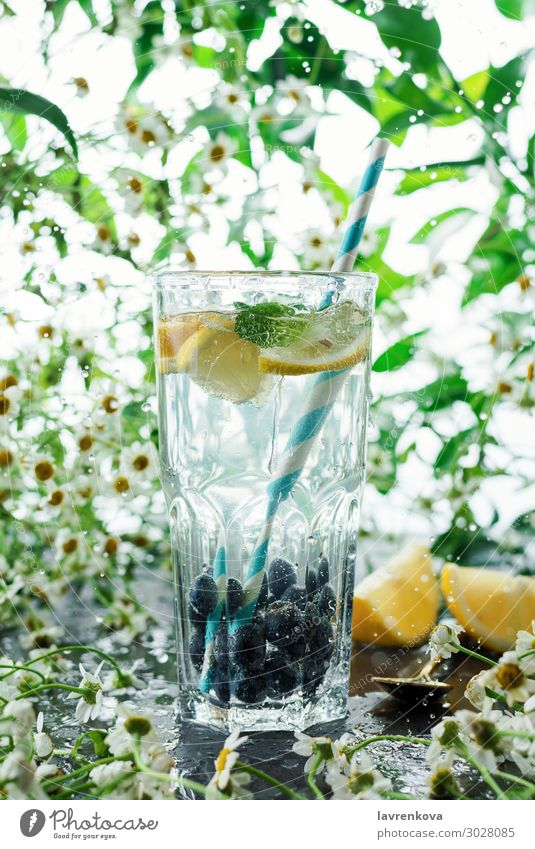 summer blueberry lemonade in a glass Daisy Family Flower Fresh Glass Green High-key Juice Leaf Lemon Lemonade Lime paper straw Mint Natural Plant Spring squeeze