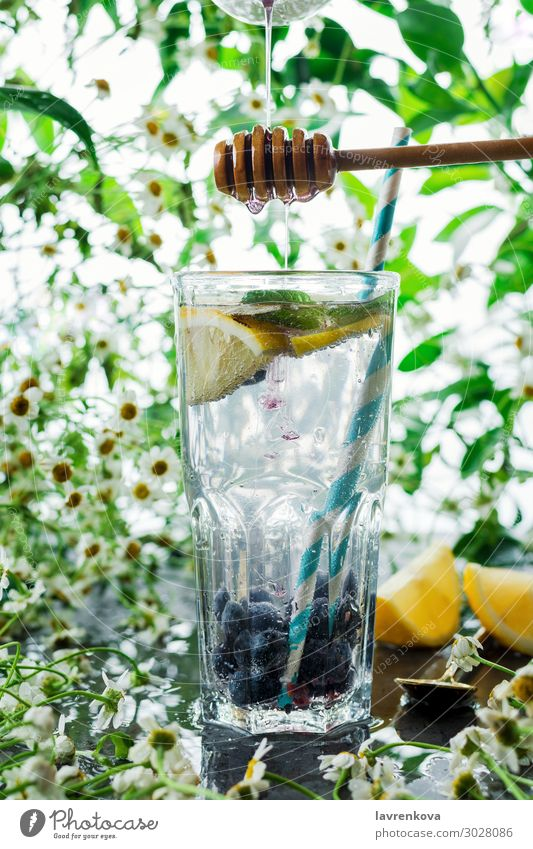summer blueberry lemonade in a glass Beverage Blueberry Citrus fruits Cocktail Cold Cool (slang) Daisy Family Drinking Flower Fresh Fruit Green High-key Juice