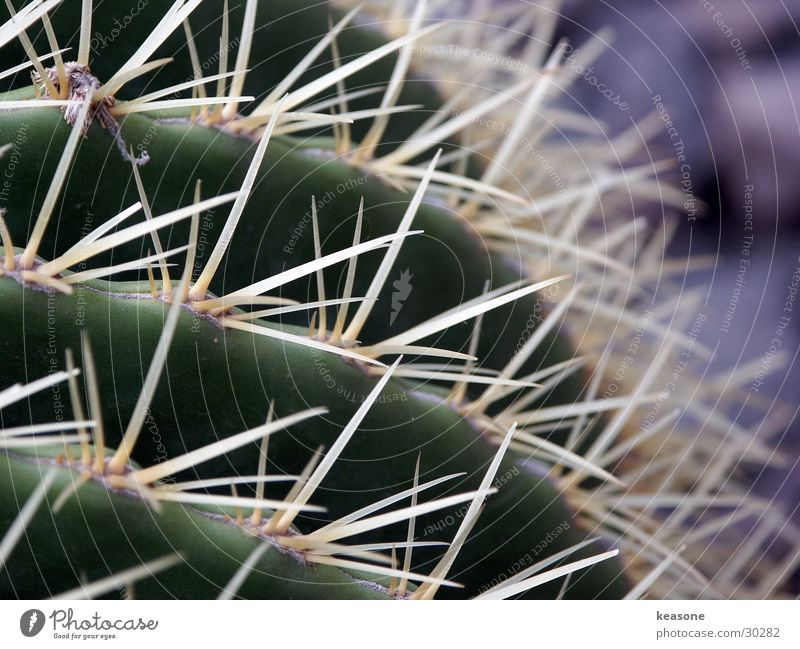 Nature Flower Green Plant Pain Lens Cactus Thorn