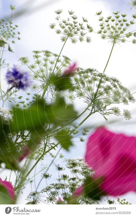 Sky Summer Green White Flower Leaf Blossom Spring Pink Violet Light blue Pick Flower field