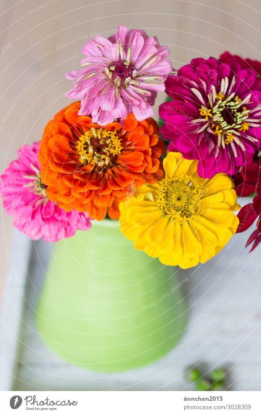 Nature Summer Colour Green Flower Relaxation Joy Yellow Blossom Spring Orange Pink Decoration Bouquet Harmonious Vase