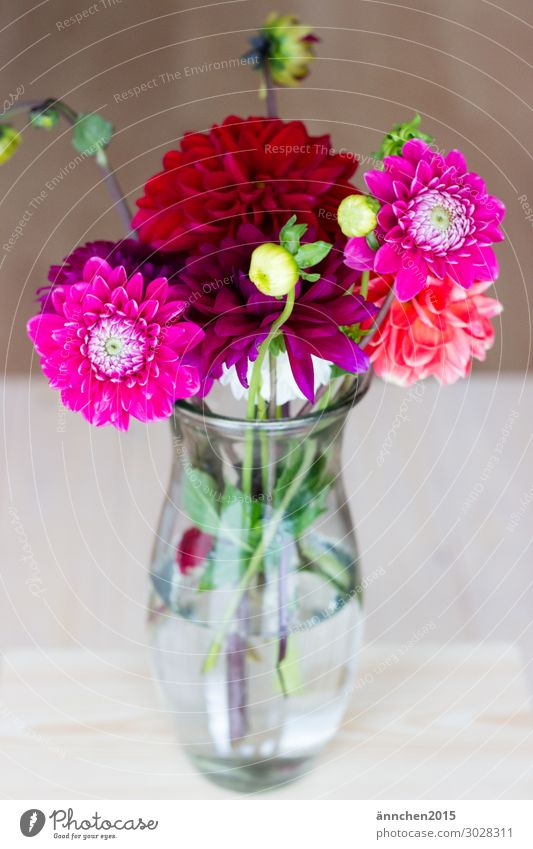 Nature Summer Plant Green Water Red Flower Autumn Feasts & Celebrations Pink Decoration Bright Bouquet Vase Embellish Pick