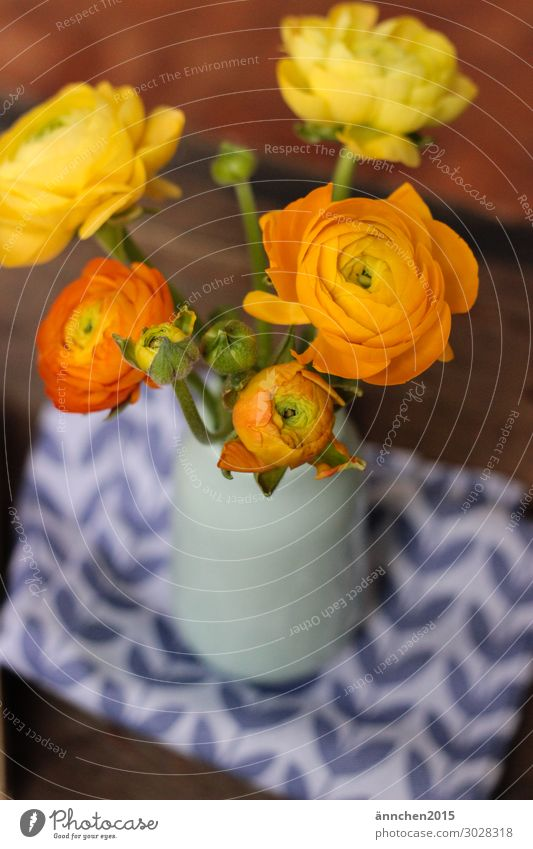 Hello Spring Celandine Flower Easter Anticipation Blossom Bouquet Vase Interior shot Stalk Yellow Orange