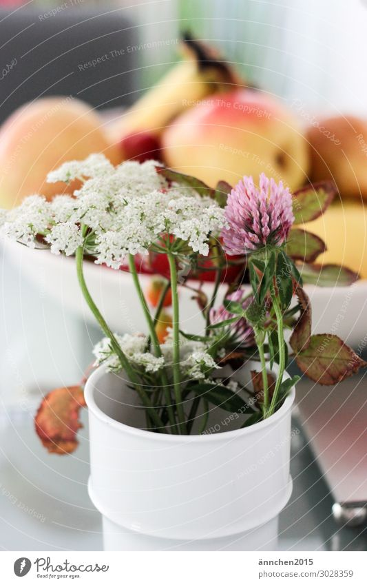 Nature Summer Plant Green White Flower Forest Autumn Meadow Pink Fruit Bouquet Vase Pick
