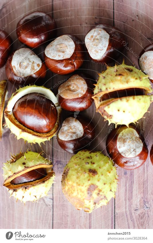 chestnuts Fruit Nature Interior shot Chestnut Thorny Autumn Infancy Childhood memory amass Forest Tree Brown Green Wood