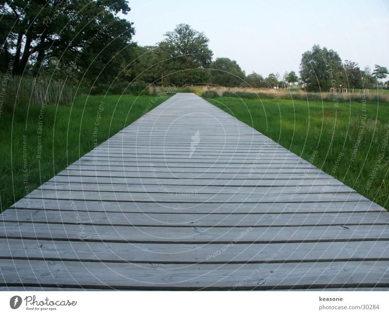 Nature Sky Green Grass Wood Lawn Common Reed Footbridge Lens
