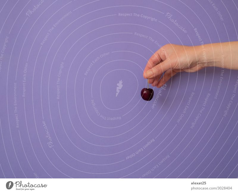 Hand with cherry on purple background with copy space Fruit Dessert Vegetarian diet Diet Woman Adults Nature Fresh Bright Delicious Natural Red Colour Berries