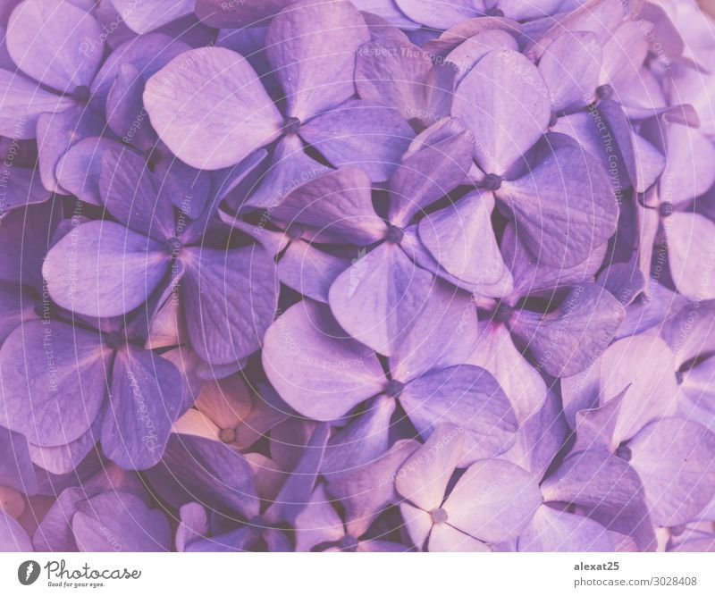 Purple floral background Design Beautiful Summer Wallpaper Wedding Nature Plant Flower Blossom Love Fresh Natural Soft Blue Romance Colour Beauty Photography