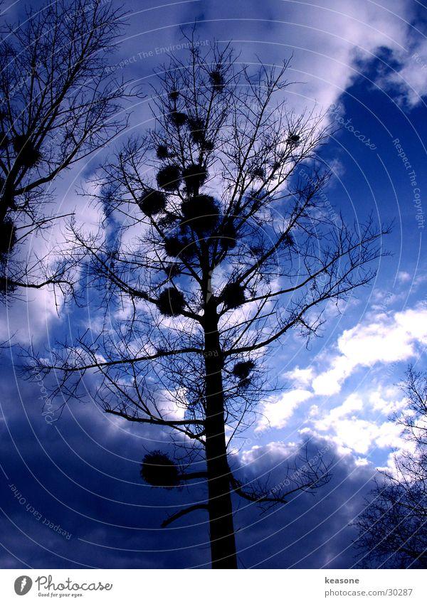 blue velvet Tree Light Twilight Sky Blue Perspective http://www.keasone.de