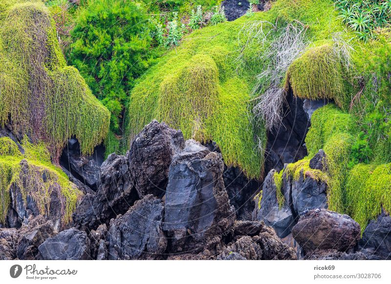 Rock in Porto Moniz on the island Madeira, Portugal Relaxation Vacation & Travel Tourism Island Nature Landscape Plant Water Coast Blue Green Idyll
