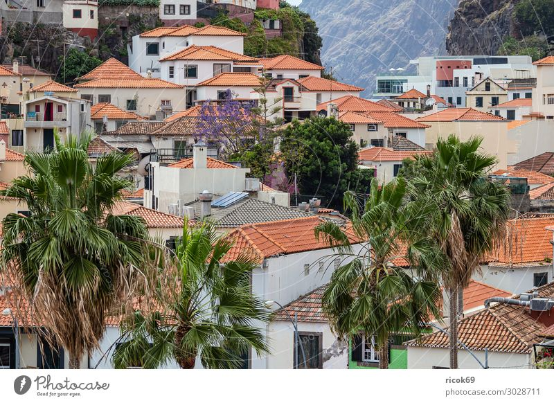 View to Camara de Lobos on the island Madeira, Portugal Relaxation Vacation & Travel Tourism Island House (Residential Structure) Nature Landscape Climate