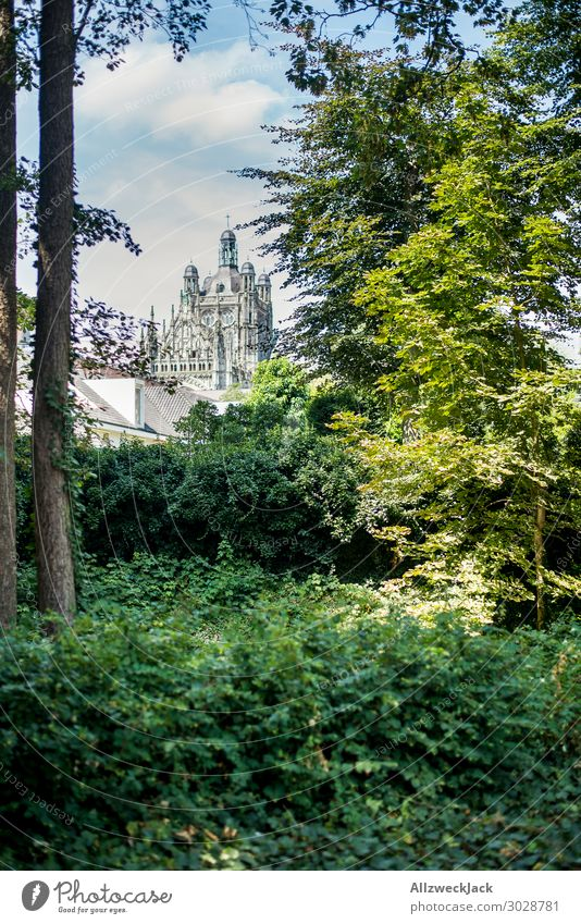 The Hertogenbosch and St. John's Cathedral Netherlands 's-hertogenbosch the bosch Forest Tree Green Nature Religion and faith Church Christianity
