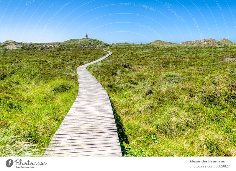 wooden bridge in a meadow, blue sky Wellness Life Relaxation Vacation & Travel Far-off places Freedom Nature Park Happy Optimism Zen green natural grass