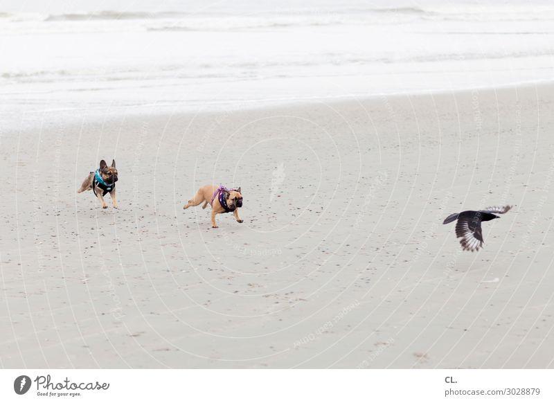 the wild hunt Summer vacation Beach Ocean Island Waves Sand Water Coast North Sea Animal Pet Wild animal Dog Bird Wing 3 Flying Walking Funny Joy