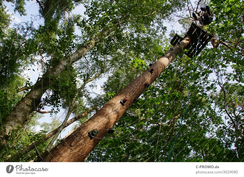 Human being Sky Youth (Young adults) Young man Tree Forest 18 - 30 years Adults Wood Sports Masculine Body 13 - 18 years Adventure Tall Fear of heights