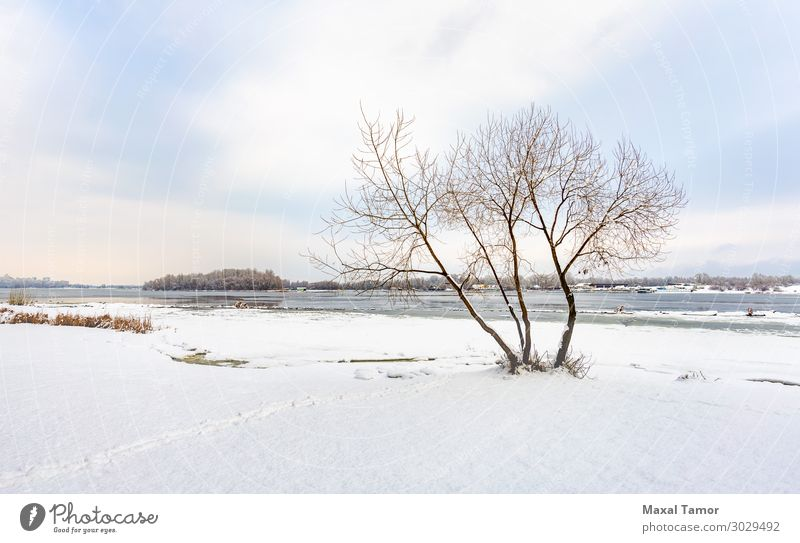 A willow close to the Dnieper river in Kiev, during winter Vacation & Travel Winter Snow Environment Nature Landscape Sky Clouds Weather Tree Forest Lake River