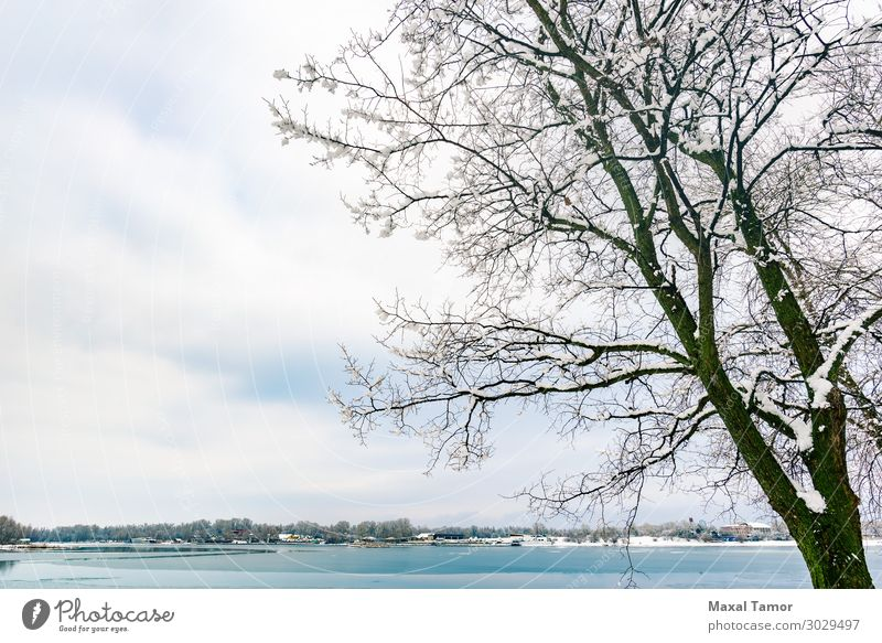 A poplar close to the Dnieper river in Kiev, during winter Vacation & Travel Winter Snow Environment Nature Landscape Sky Clouds Weather Tree Forest Lake River