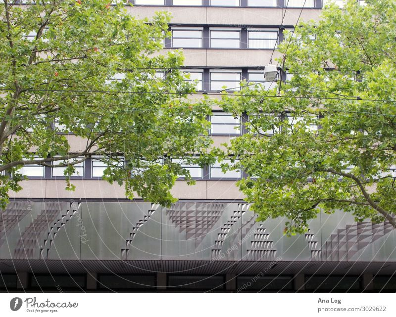 Town Tree Facade Living or residing Arrangement Esthetic Authentic Downtown Kassel