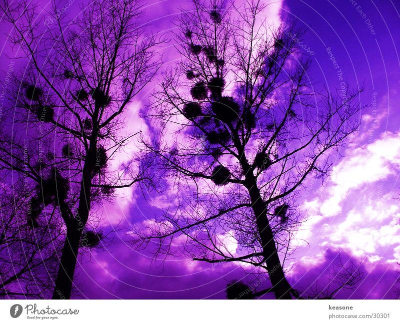 Sky Tree Black Perspective Violet Lens