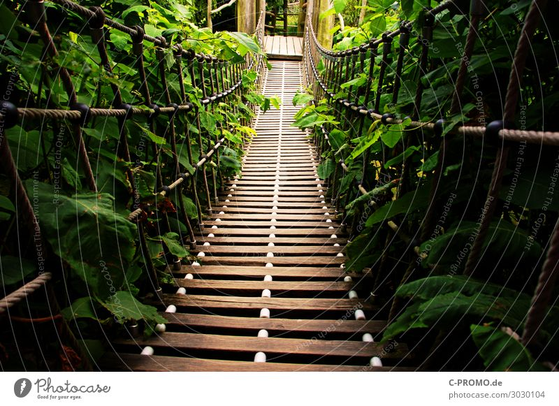 Into the jungle! Vacation & Travel Adventure Expedition Hiking Brown Green Trust Safety Brave Nature Lanes & trails Suspension bridge Colour photo Exterior shot