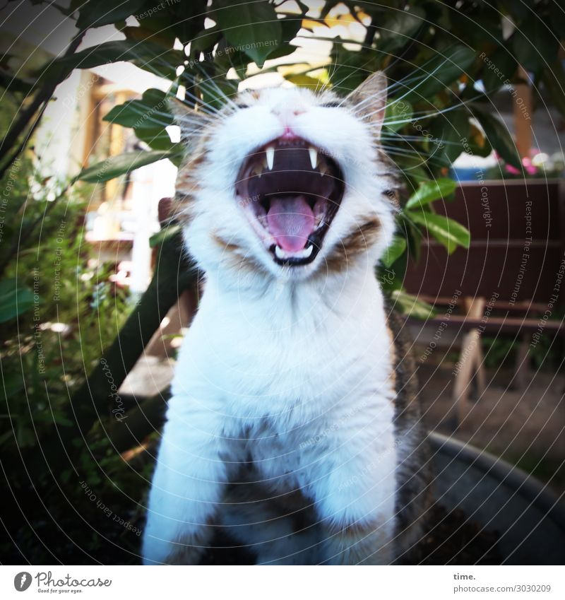 Cat Plant House (Residential Structure) Animal Life Exceptional Moody Wild Power Smiling Happiness Joie de vivre (Vitality) Anger Pet Set of teeth