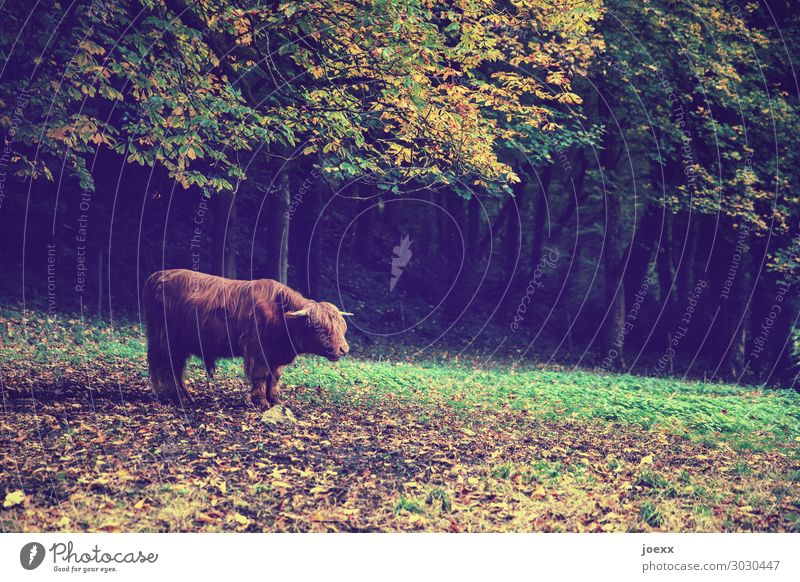 wait. Nature Meadow Forest Farm animal 1 Animal To feed Stand Wait Authentic Exceptional Free Large Brown Yellow Green Orange Responsibility Calm Boredom Serene