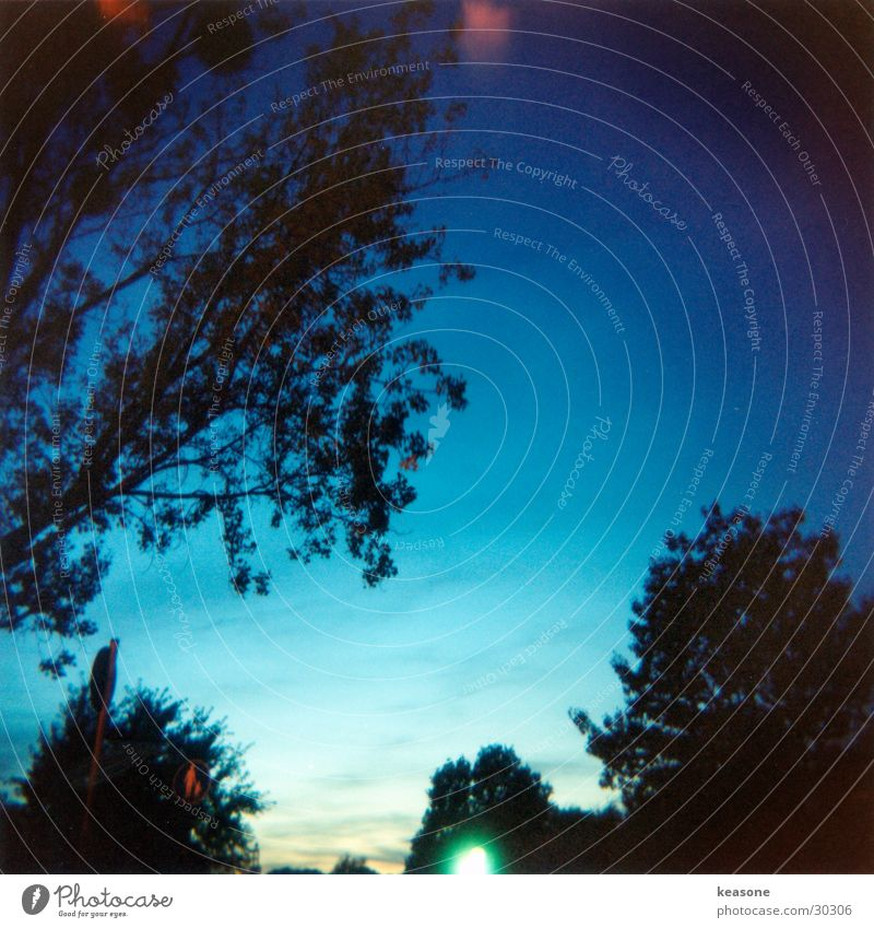 sky`s the limit Tree Light Shaft of light Holga Long exposure Sky Blue www.keasone.de