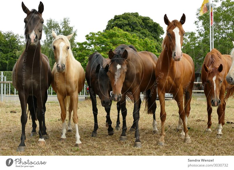 horses Environment Earth Spring Summer Autumn Field Animal Horse Group of animals Herd Wait Glittering Large Ride Livestock breeding Colour photo Deserted Day