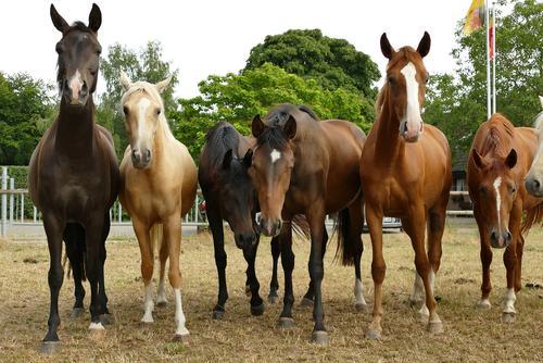Summer Animal Autumn Environment Spring Field Earth Glittering Group of animals Wait Large Horse Livestock breeding Ride Herd