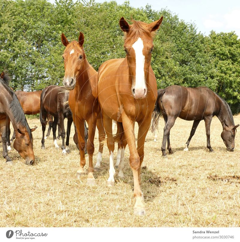 horses Animal Horse 4 Group of animals Herd Going To enjoy Stand Safety (feeling of) Together Love of animals Dream Longing Society Idyll Ride Breed Freedom