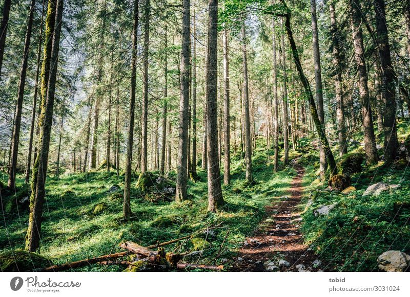 forest path Nature Landscape Plant Spring Summer Beautiful weather Tree Grass Bushes Moss Forest Hill Lanes & trails Far-off places Infinity Idyll Target