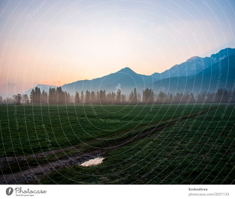 Mountain dawn, mist in trees, field, ice in path puddle Vacation & Travel Tourism Trip Adventure Far-off places Snow Nature Landscape Sky Fog Tree Grass Meadow