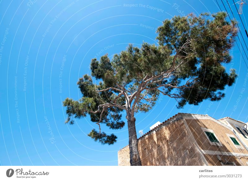 just relax and unwind Spain Balearic Islands Majorca Stone pine Allepo Pine Facade Building Old Natural stone Warmth Summer Vacation & Travel Relaxation