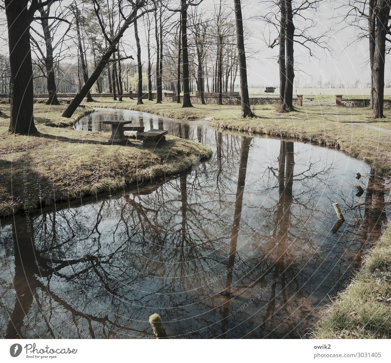 Wet curve Environment Nature Landscape Plant Water Winter Tree Grass Bushes Park Forest Brook Idyll Far-off places Calm Peaceful Twigs and branches Curve