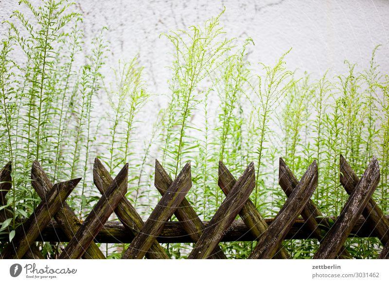 hunter's fence Fence Wooden fence hunting fence Neighbor Real estate Garden Garden fence Border Barrier Garden plot Deserted Copy Space Plant Blossom