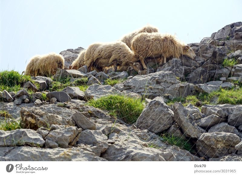 Protection from the scorching sun Environment Nature Landscape Sunlight Summer Beautiful weather Warmth Grass Rock Mountain picos de europe Peak Fuente Dé