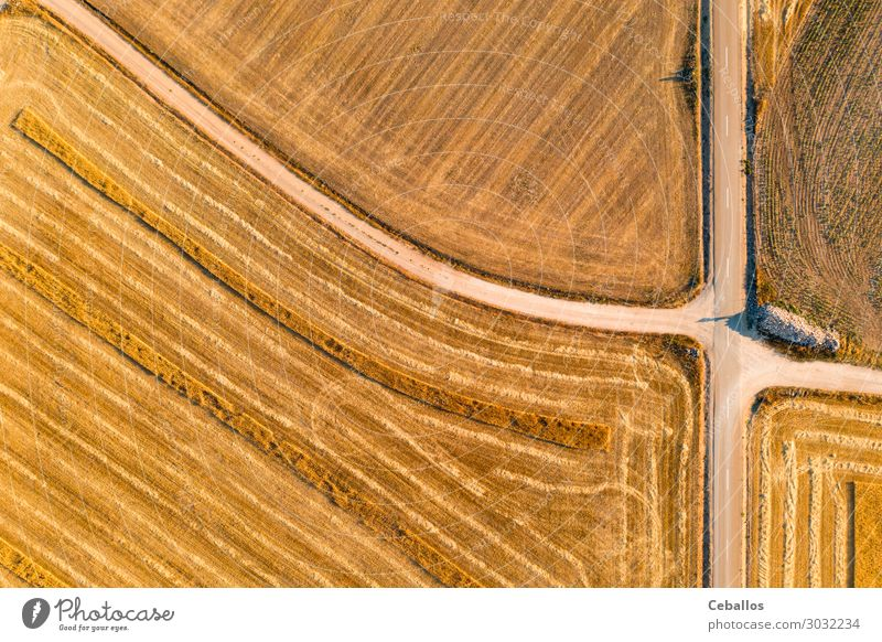 Cereal fields in Castilla y Leon Spain bird´s eye view Bread Summer Sun Nature Landscape Plant Sky Clouds Horizon Meadow Aircraft Growth Fresh Bright Yellow