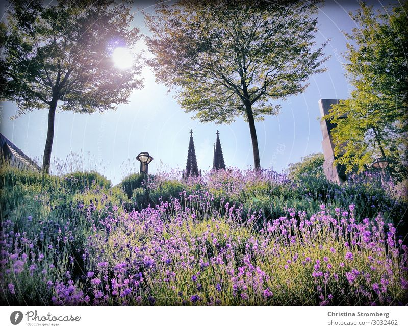 cathedral points Love your city Nature Plant Sunlight Summer Beautiful weather Cologne Cologne Cathedral Dome hell North Rhine-Westphalia rhineland