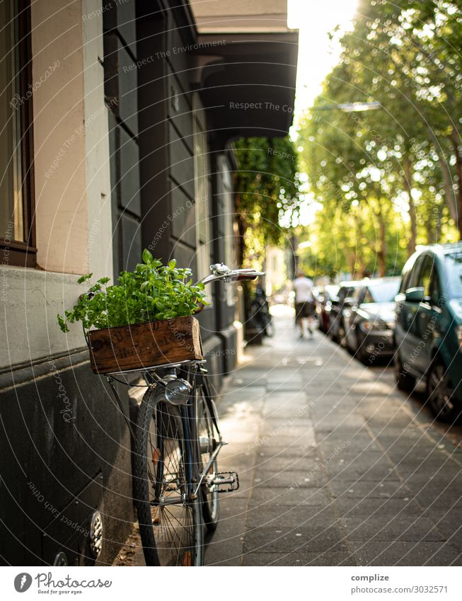 Bicycle with vintage herb wooden box Food Herbs and spices Nutrition Lunch Picnic Organic produce Vegetarian diet Italian Food Lifestyle Shopping Healthy Eating